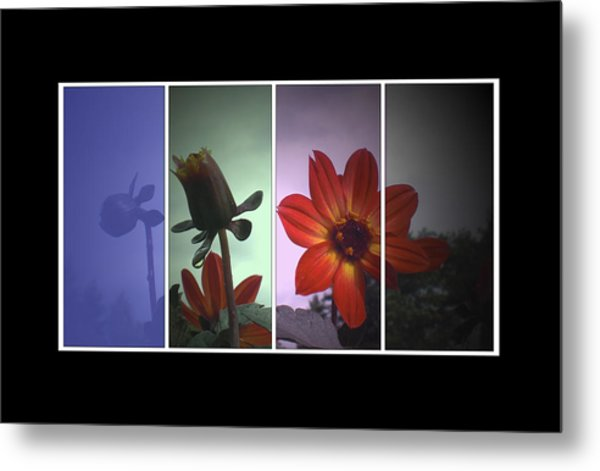 Color My World Metal Print by Holly Ethan