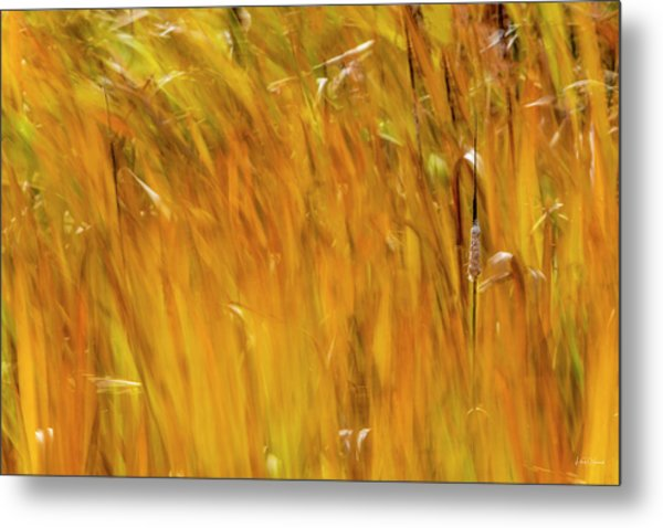 Metal Print featuring the photograph Color Of Wind by Leland D Howard