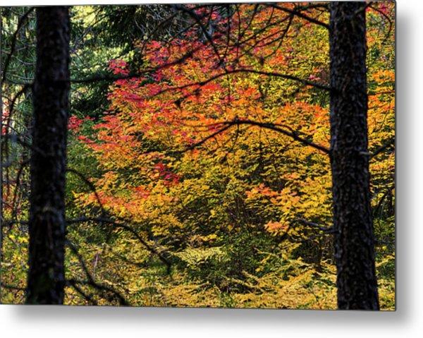 Cascade Mountain Range Fall Color Metal Print
