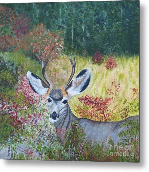 Colorado White Tail Deer Metal Print