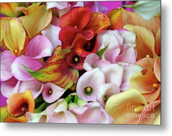 Colorful Calla Lilies Metal Print