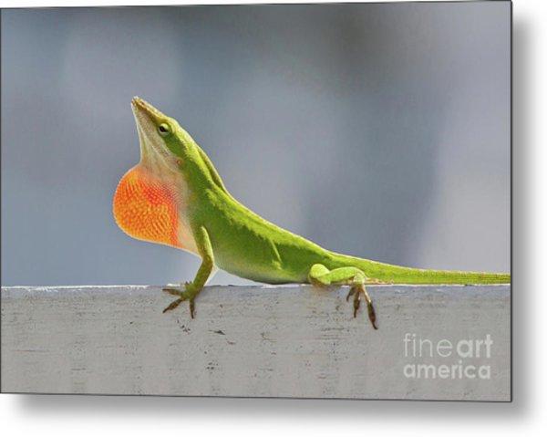 Colorful Carolina Anole Lizard Metal Print