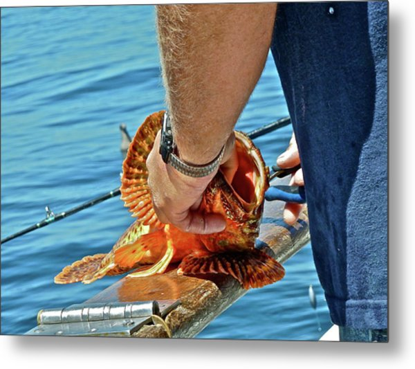 Colorful Catch Metal Print