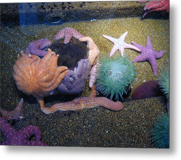 Colorful Coral Metal Print by Laurie With