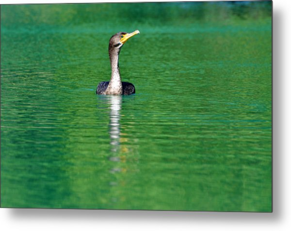 Colorful Cormorant Metal Print by Teresa Blanton