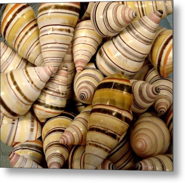 Colorful Cream And Tan Shells Metal Print by Rosalie Scanlon