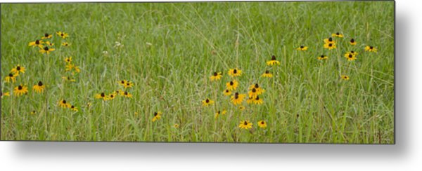 Colorful Field Metal Print