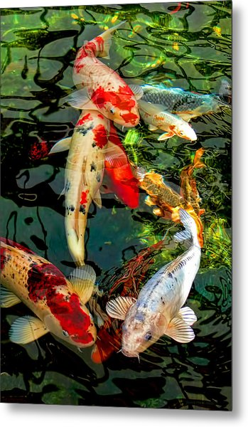 Colorful  Japanese Koi Fish Metal Print