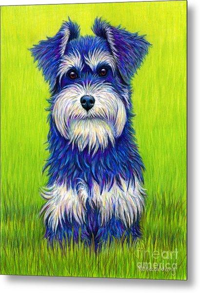 Colorful Miniature Schnauzer Dog Metal Print