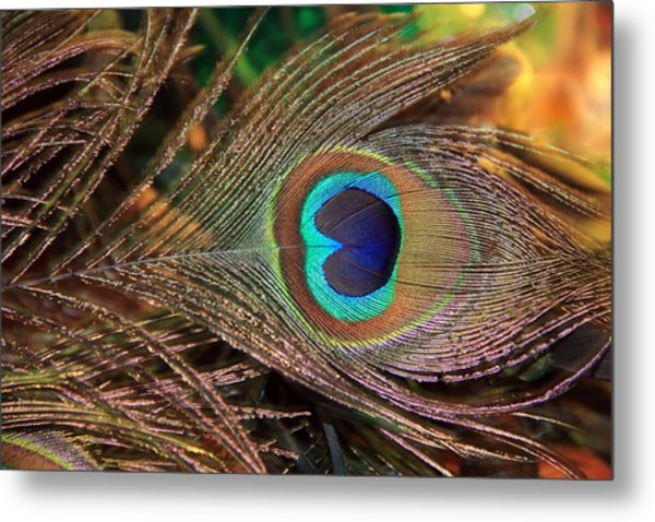 Colorful Peacock Feather Metal Print