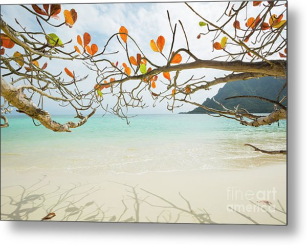 Colorful Tree North Shore Metal Print
