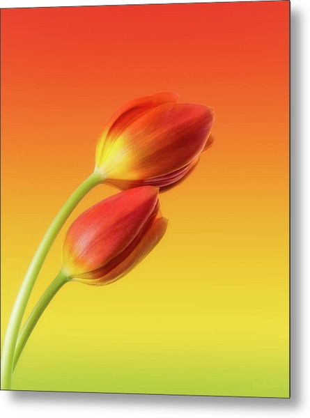Colorful Tulips Metal Print