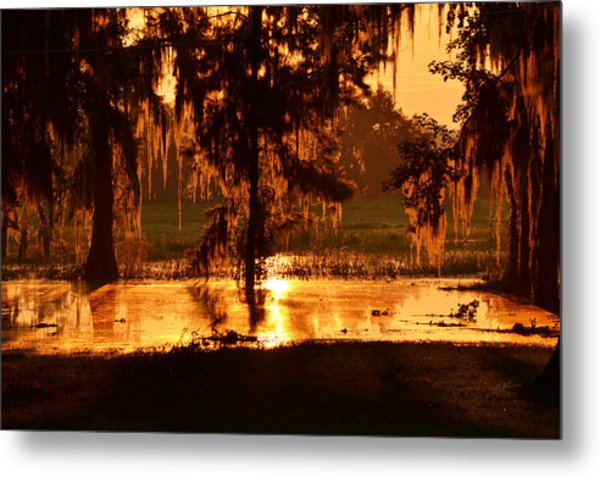 Coloring The Swamp With Sunrise Metal Print