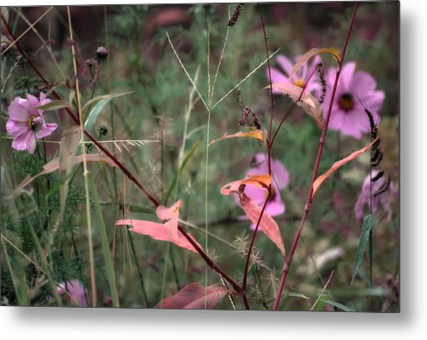 Colorization Of Autumn Metal Print by Ross Powell