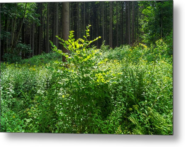 Colors Of A Forest In Vogelsberg Metal Print