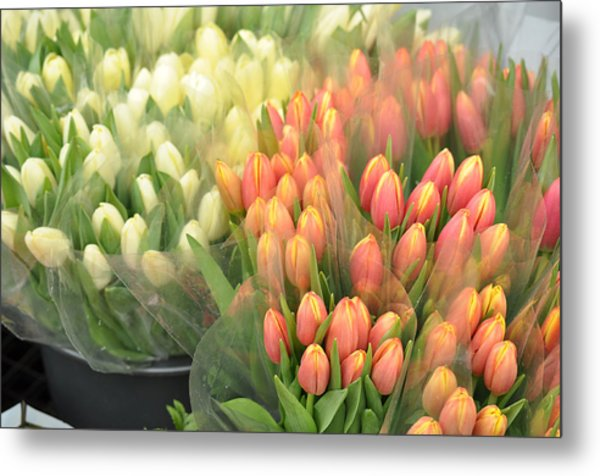 Colors Of Gauze Metal Print by JAMART Photography