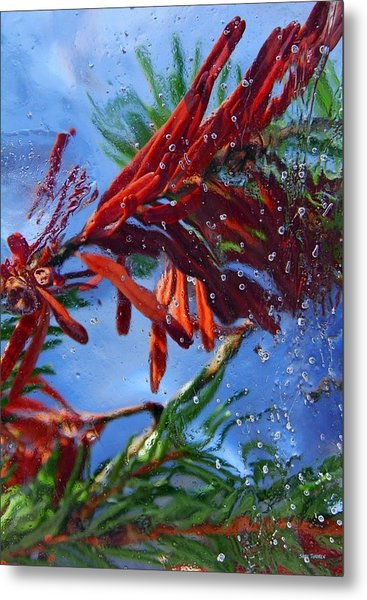 Colors Of Nature Metal Print