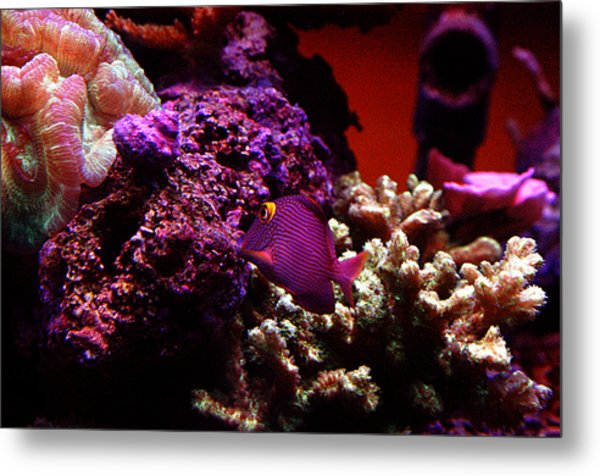 Colors Of Underwater Life Metal Print