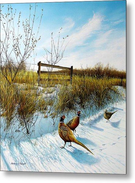 Colors Of Winter - Pheasants Metal Print