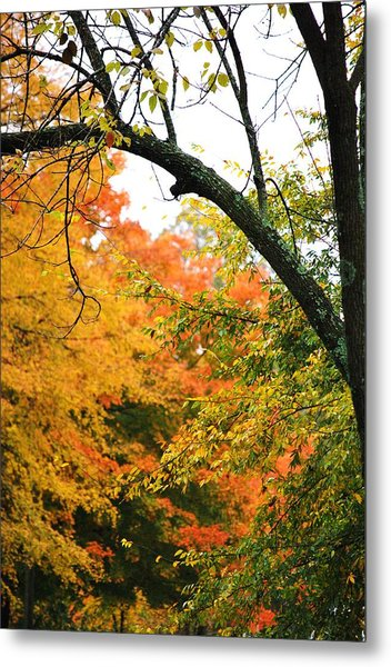 Colors That I See Metal Print by Trudi Southerland