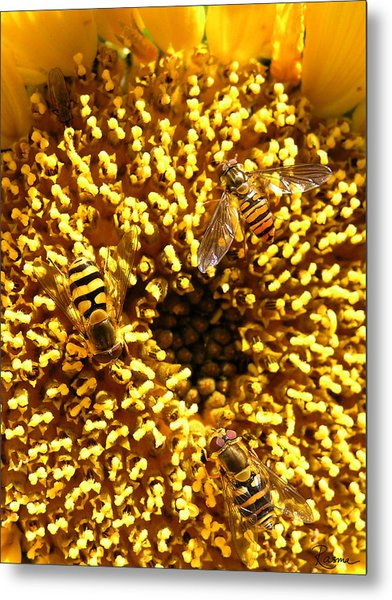 Colour Of Honey Metal Print