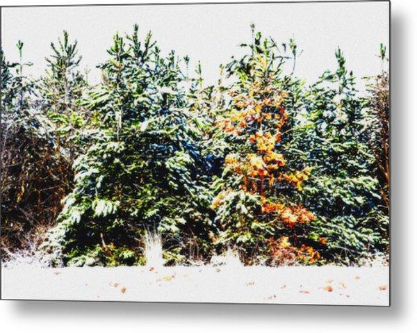 Coloured Trees  Metal Print