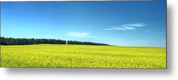 Colours Of Summer. Voznesenske, 2015. Metal Print