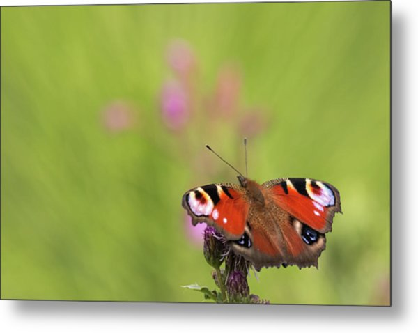 Colours Of Summer Metal Print