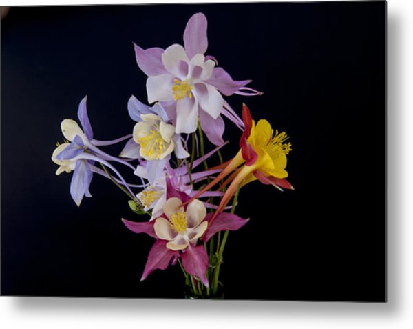 Metal Print featuring the photograph Columbine Medley by Gary Lengyel