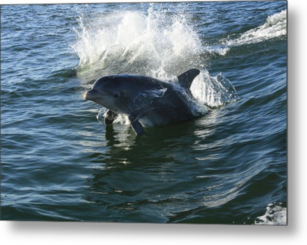 Come Play Metal Print by Tara Moorman Photography