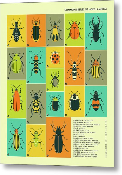 Common Beetles Of North America Metal Print