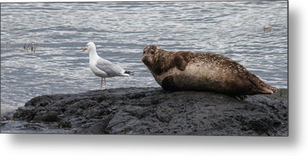 Common Seal And The Gull Metal Print
