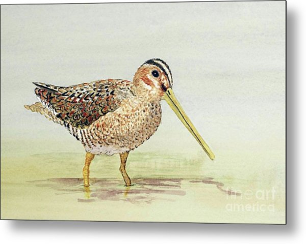 Common Snipe Wading Metal Print