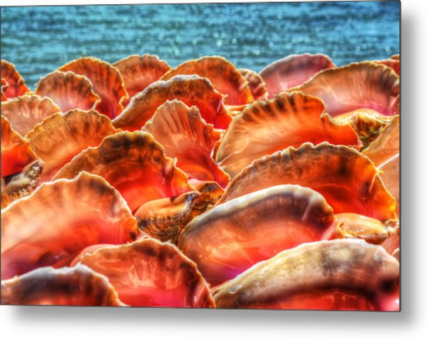 Conch Parade Metal Print