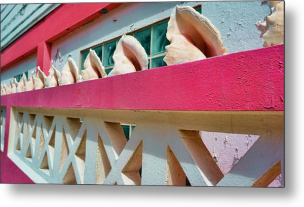 Conch Shells On A Pink Wall - Ambergris Caye, Belize Metal Print