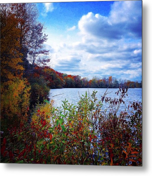 Conservation Park And Pine River In The Fall Metal Print