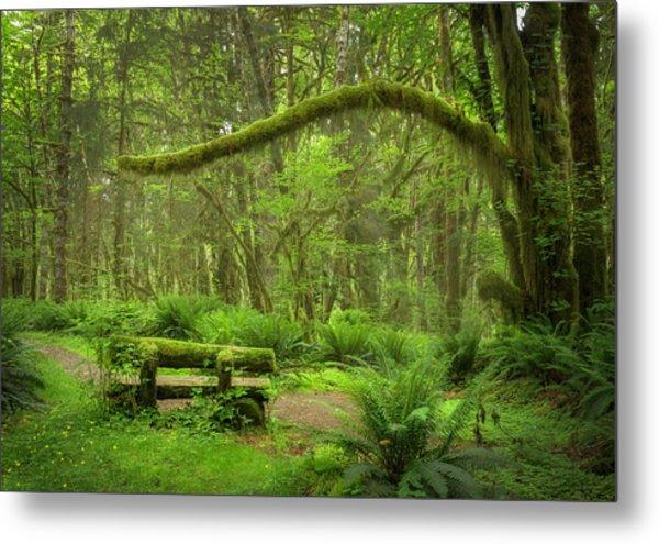 Contemplative Rain Forest Metal Print