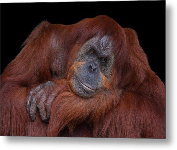 Contented Orangutan Metal Print