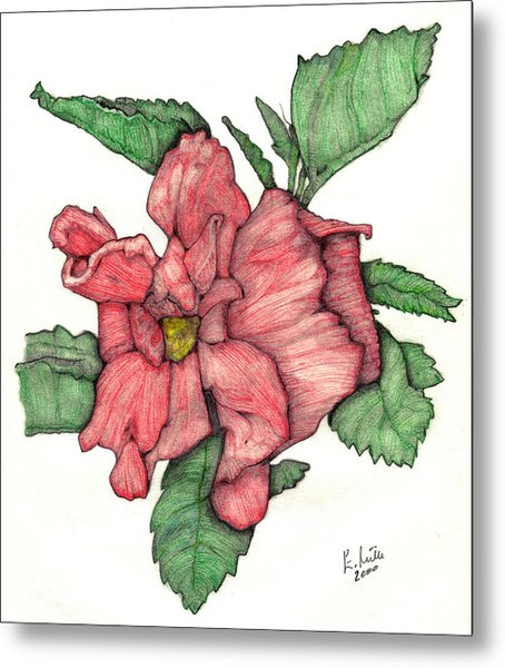 Contour Double Hibiscus Metal Print by Edward Ruth
