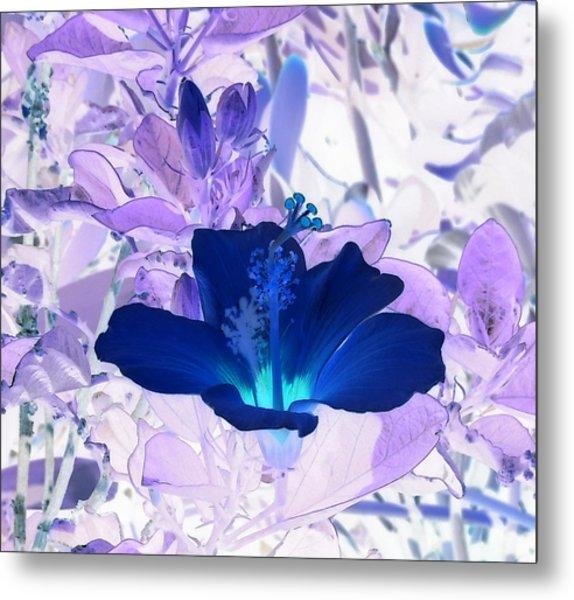 Cool Blue Hawaiian Hibiscus Metal Print
