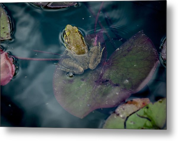 Cool Frog-hot Day Metal Print