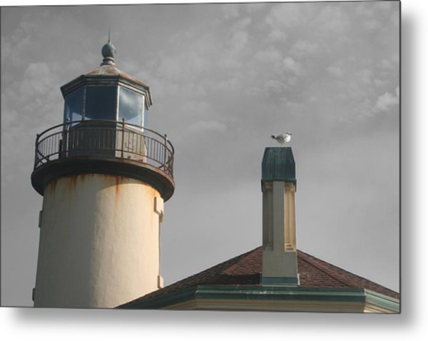 Coquille Metal Print