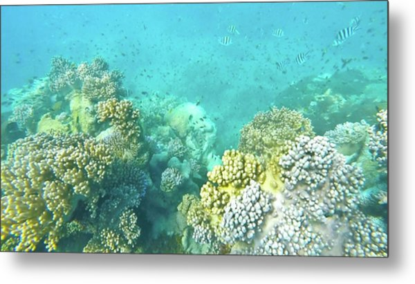 Metal Print featuring the photograph Coral by Debbie Cundy