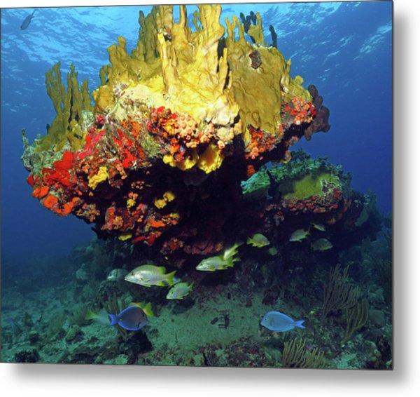 Coral Reef Scene, Calf Rock, Virgin Islands Metal Print