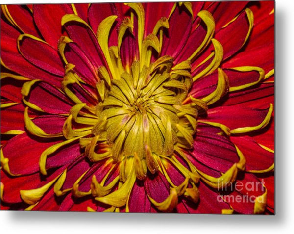Core Of The Flower Metal Print