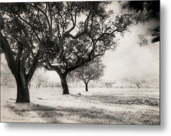 Cork Trees Metal Print