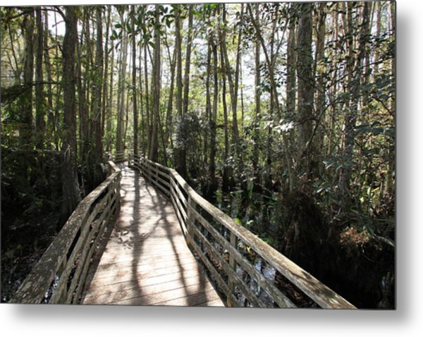 Corkscrew Swamp 697 Metal Print