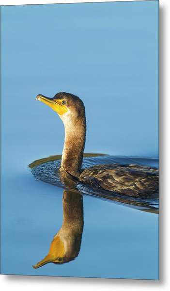 Cormorant Reflection Metal Print