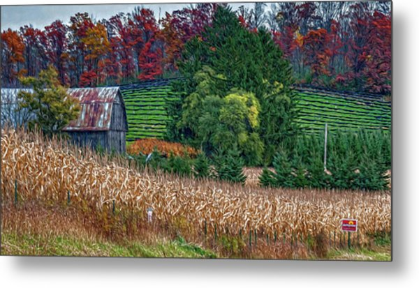 Corn And Ginseng On Poverty Hill Metal Print