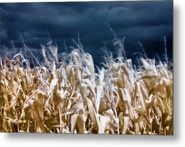 Metal Print featuring the photograph Corn Field by Helga Novelli